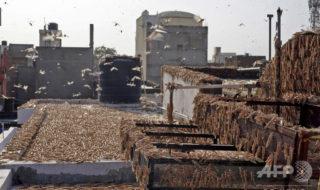バッタの大群、旅客機の運航に深刻な影響及ぼす インド当局が警鐘
