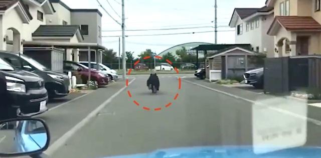 マスコミが熊に煽り運転